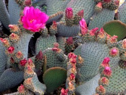 The Top 10 Cacti For Your Desert Garden