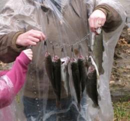 Stringer Full of Trout