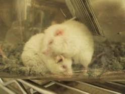 Nestle Animal Testing, Human Murder & Child Labor