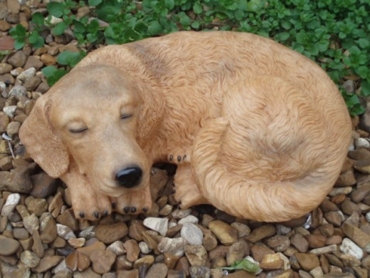 Generally, dogs sleep a lot when they do not have anything else to do.