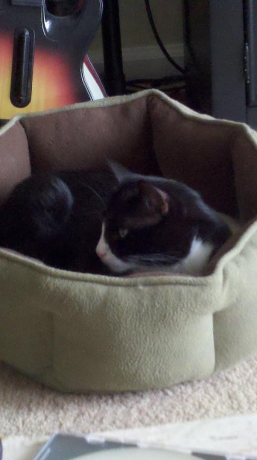 Dunkin getting comfortable