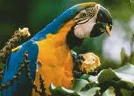 One of many colorful jungle birds
