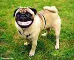 """""""If I see that NHS dentist again!"""""""