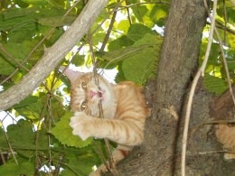 Up a tree in no time! I told the woman I could handle myself.