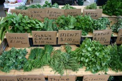 Tips and Ideas For Planting An Herb Garden