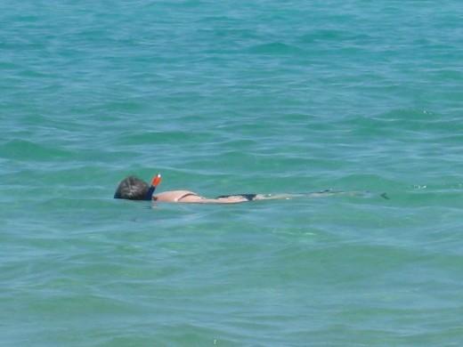 Love Snorkeling