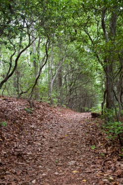 A traditional dirt and leaf trail at Rocky Neck State Park, CT