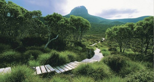 Cradle mountain walks are relaxing and are a fantastic way to spend your holiday!