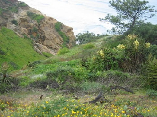 2) Trail head leading to the beach, Torrey Pine State Park