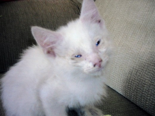 Image of Caspurr one hour after he was rescued