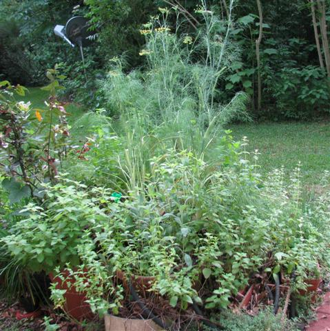 Various herbs, including fennel, thyme, sage, and rosemary.