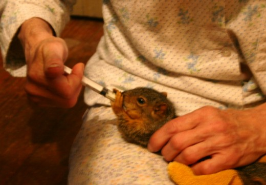 special formula for baby squirrels...they loved it