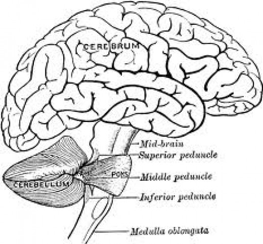 Unknown areas of the brain that can affect memory