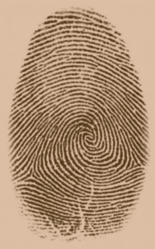 A typical fingerprint
