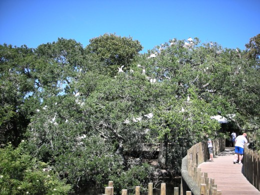 Part of the rookery
