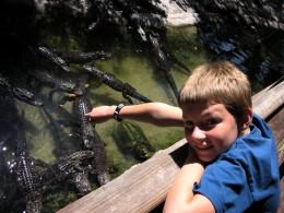 Feeding the alligators