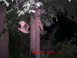 They took turns assaulting the bird feeder.