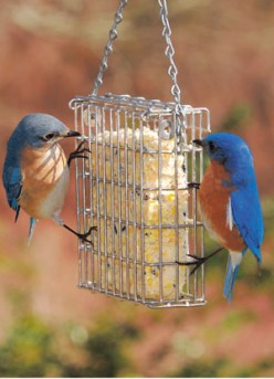 "Suet, It's What""s For Dinner"