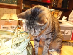 Funny Adventures in Cat Adoption, Part Eight - Hubwriter Helper