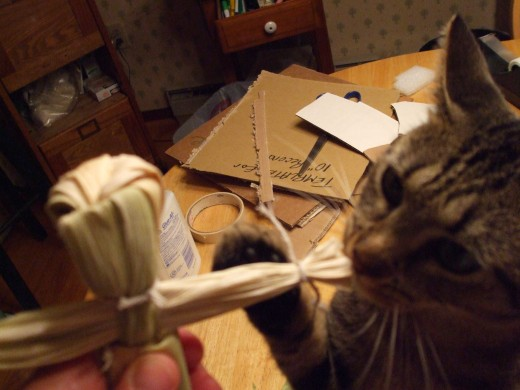 "Skeeter the Cat ""smell-igates"" a corn husk doll."