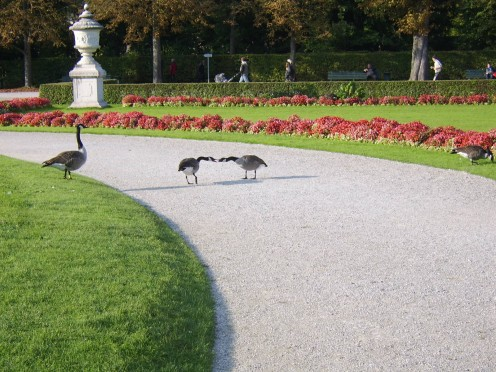 Wild birds cavort in Nymphenburg Palace Gardens