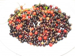 Photo of mixed summer fruits - red currants,blackcurrants and white currants.