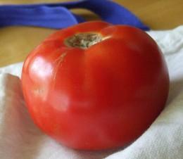 Luscious tomato.