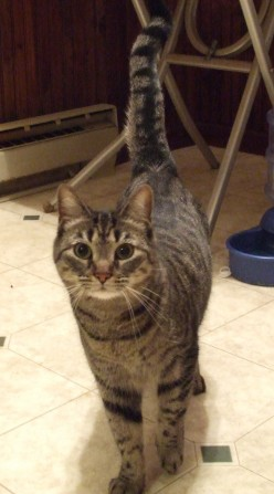 The FIRST Cat - The One Who Adopted the Person, Part Nine of Adventures in Cat Adoption