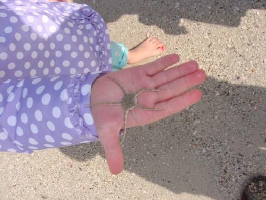 A live starfish