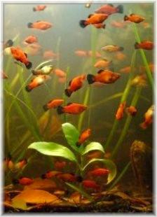 Title: Fish ~License: sxu license ~Photographer: hagit: everystockphoto.com