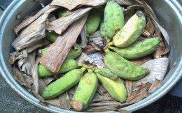 DAY 2 - Bananas are half-ripened. (Photo by Travel Man)