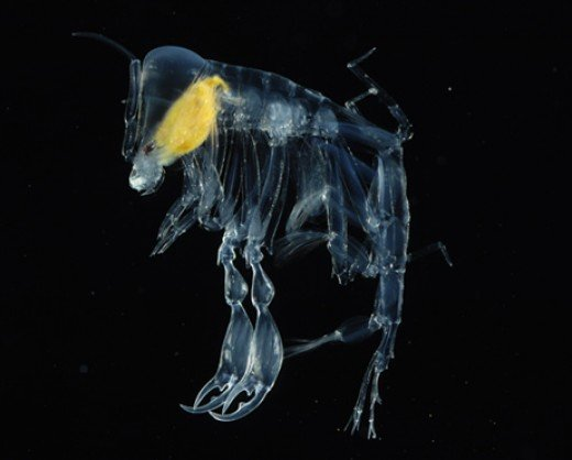 The Colossal Squid Exhibition - The Deep - Bioluminescence in the