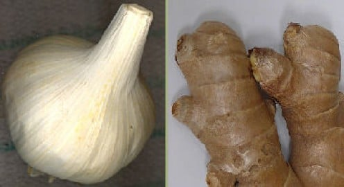 Ginger: Wikimedia Commons / Frank C. Miller Garlic copyright Tricia Mason