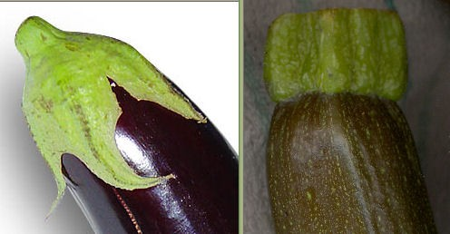 Aubergine: Wikimedia Commons / Horst Frank Courgette: Copyright Tricia Mason