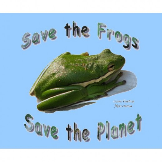 Green Tree Frog and other amphibians are in crisis.