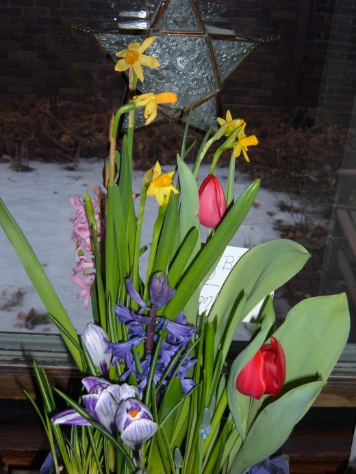 Bulb gardens are another great winter gift. The flowers are always a surprise. What color? What varieties? and How tall? His bouquet has Tulips, Jonquils & Hyacinths.