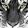 LexiAdams profile image