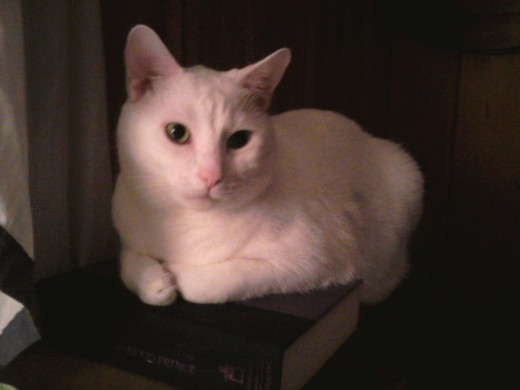 Prince Fredward sits on my copy of Harry Potter and the Half Blood Prince.