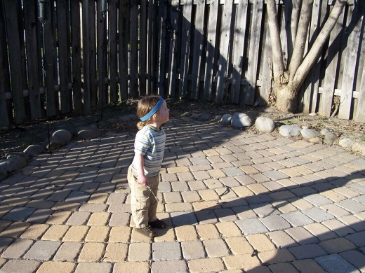 A Confident Child Watching a Stick He Has Thrown.