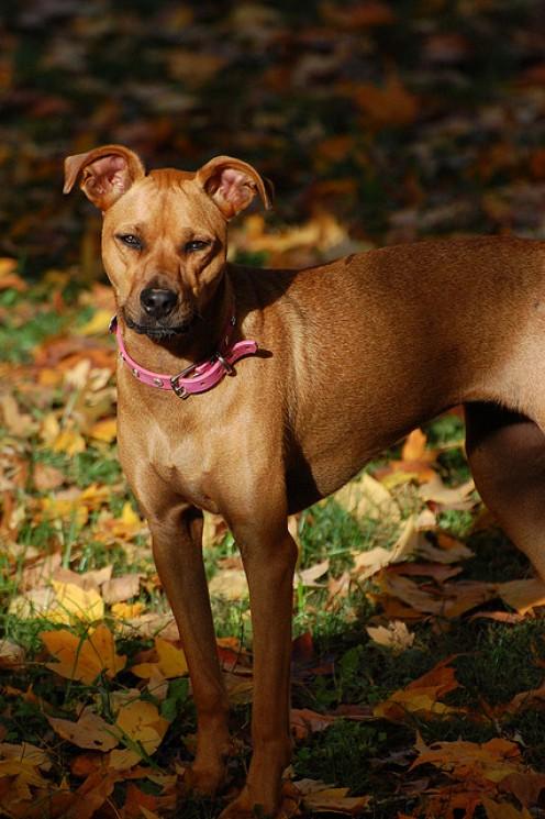 Windyfer in her pink dog collar