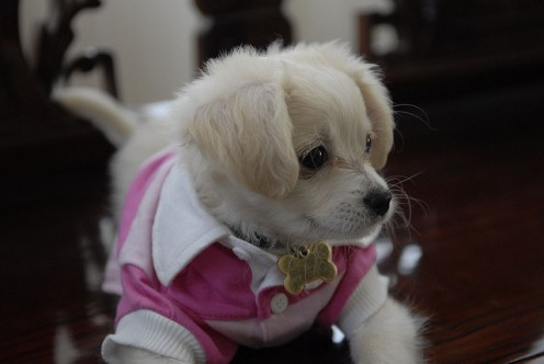 Truffle in her pink outfit