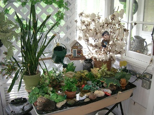 A bright sunny southern exposure is best for the indoor garden.