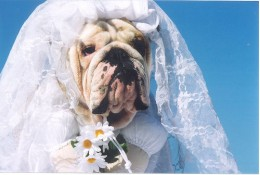 Beauty is in the eye of the beholder, but no bride wants to be a total dog!
