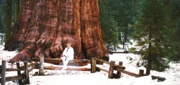 There I am seated in front of the General Sherman sequoia tree.