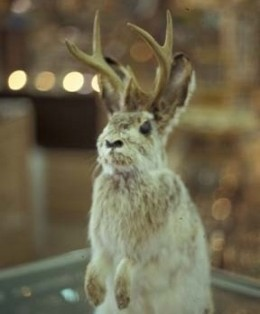I'm a poor starving Jackalope, so please feed me.