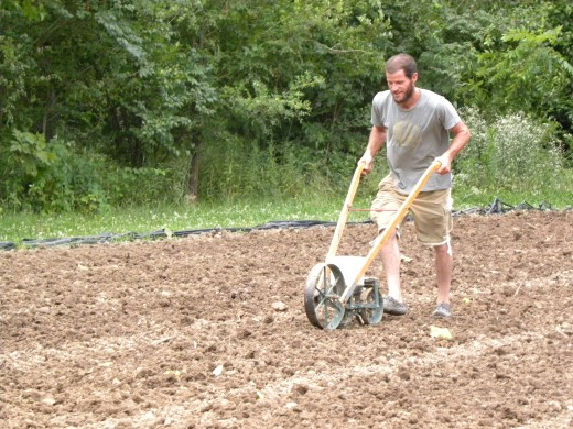 Our farmer sows seeds in the small field using a seed hopper. We'll have arugula and other cool weather crops come fall.