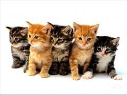 Indoor cat vs outdoor cat? Advantages and disadvantages!