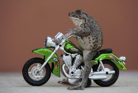 """""""Cane Toads Take Over!"""""""