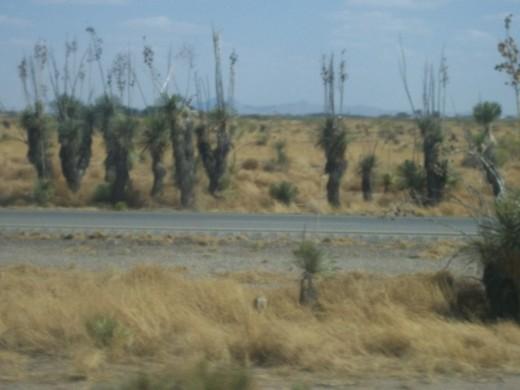 Arazona