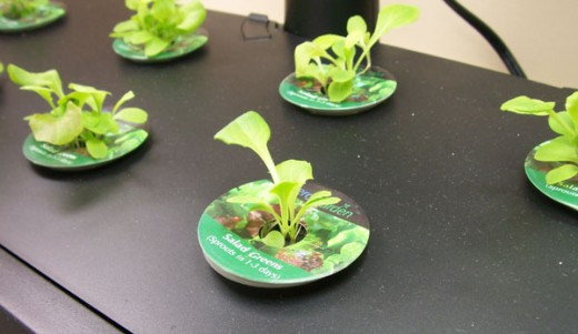 Seed pods inserted into grow surface